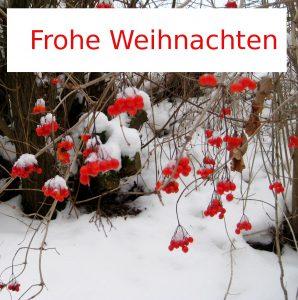 Frohe Weihnachten - Foto: Rote Beeren auf weißem Schnee