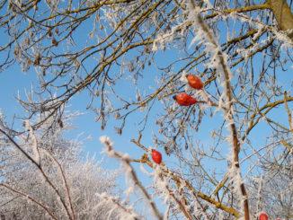 Rot weisses Winterbild